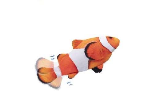 דג לחתול