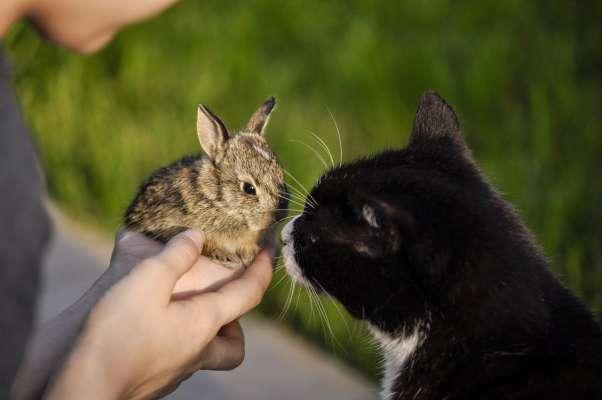 ארנבים וחתולים
